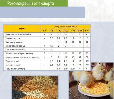 Чем кормить цыплят таблица