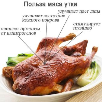 Ценность утиного мяса