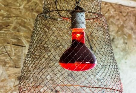 Лампа в утятнике