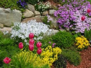 цвееы