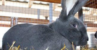 кролики резин