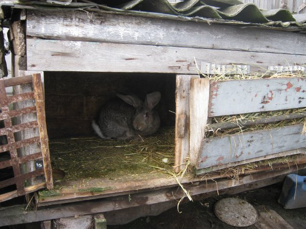 Бункерные кормушки для кроликов своими руками с