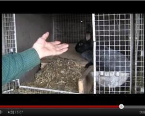kletki_dlya_krolikov_video