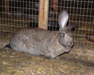 кролик резин
