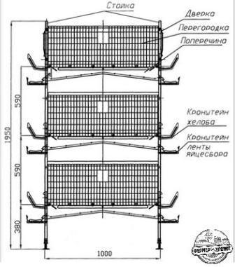 Описание строительства клетки