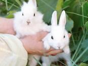 кролики, чем кормить кроликов