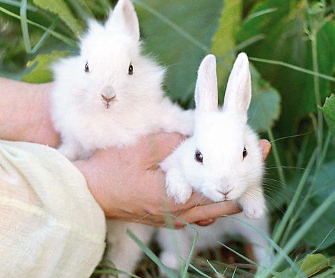 Кролики разведение, бизнес план