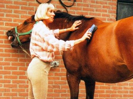 чистка лошадей, уход за шерстью лошадей