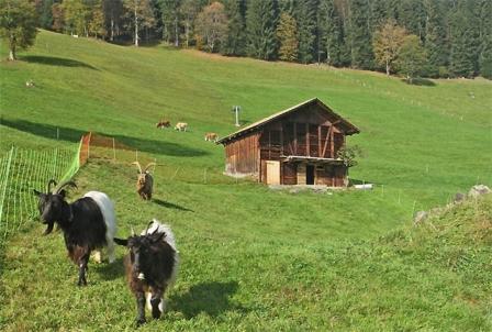 Хлев для козы, строим своими руками
