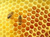 пчелы весной видео