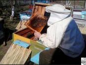 Весенний осмотр пчел видео