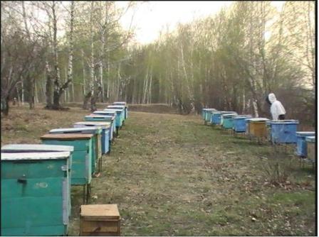 Когда выставлять пчел из зимовника