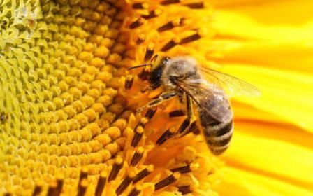 Как завести пчел с нуля