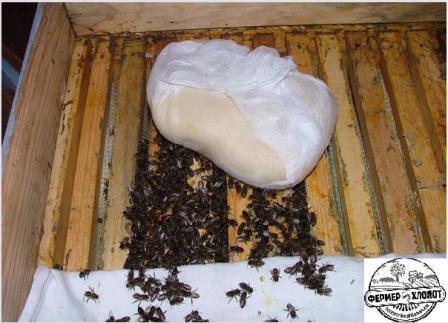 Подкормка для пчел канди