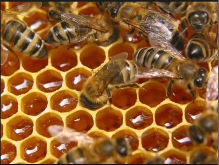 продукты пчеловодства подмор