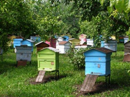 Разведение пчел для начинающих  видео