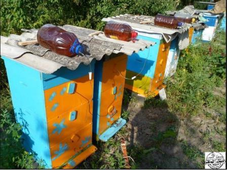 наружная кормушка для пчел