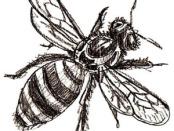 пчела картинки для детей