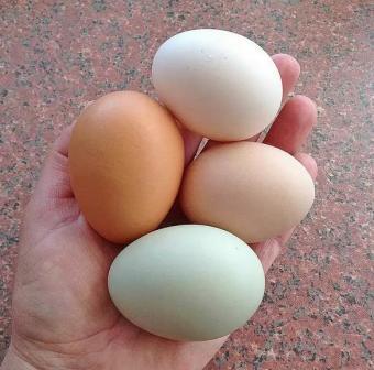 Мелкие яйца, почему