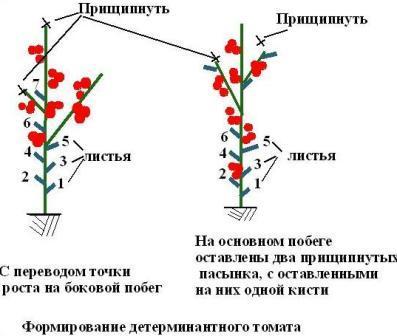 схема пасынковки томатов
