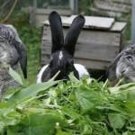 Растения для кроликов