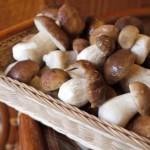 Как правильно заготавливать грибы на зиму