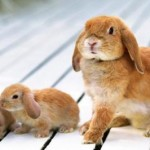 Основные болезни кроликов и меры борьбы с ними