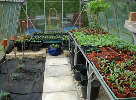 Бизнес план выращивания цветов в теплице