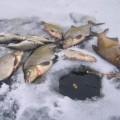 Зимняя рыбалка на удочку