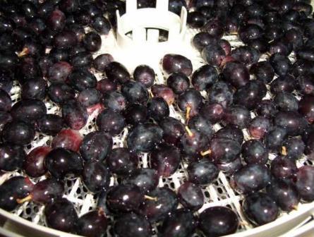 Сушить виноград в сушилке