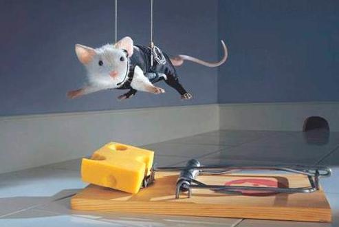 Как избавится от мышей
