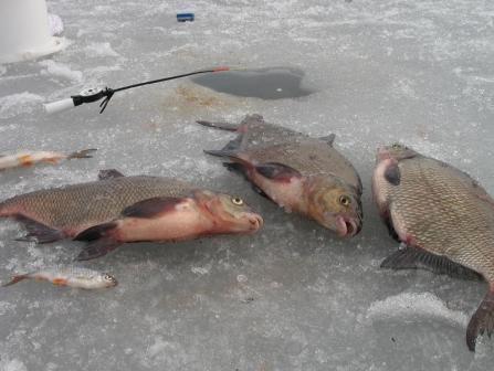 как ловить леща осенью на озере