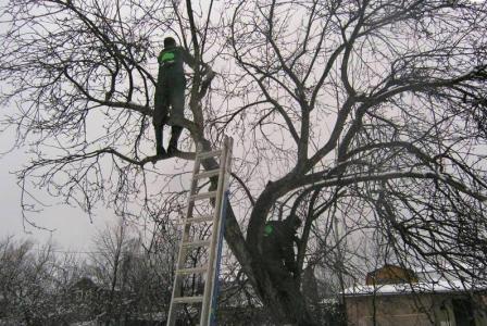 Какие плодовые деревья обрезать зимой