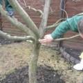 обрезка деревьев зимой_1