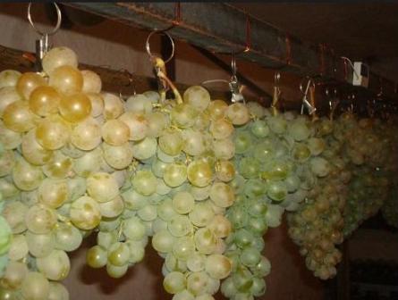 подвешиваем виноград