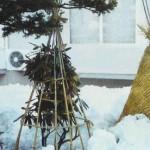 Укрытие яблонь на зиму, укрываем молодые яблони