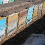 Рекомендации пчеловодам на февраль. Осматриваем семейства