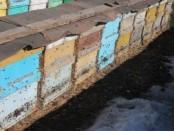 Пчелы в феврале_1