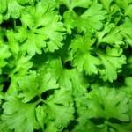 Круглогодичное выращивание зелени