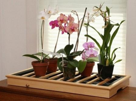 Правильное освещение домашней орхидеи