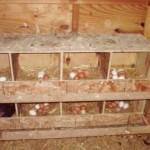 Как легко сделать гнезда для кур несушек
