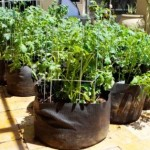 Как выращивать картофель в мешках для экономии пространства?
