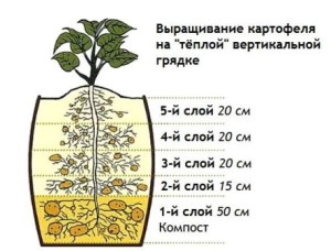 выращивание картофеля на вертикальной грядке
