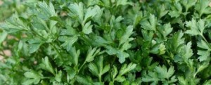 зелень и травы