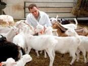 болезни коз симптомы и лечение
