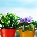 10 лучших удобрениий для комнатных растений