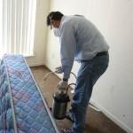 Как уничтожить клопов в доме и  квартире