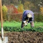 Чем  и как обрабатывать почву осенью от болезней и вредителей