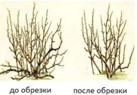 obrezka_krijovnika_oseniy