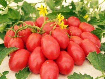 томат ракета характеристика и описание сорта